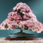 Ray Nesci Bonsai - Bonsai Tree - Annual Calendar